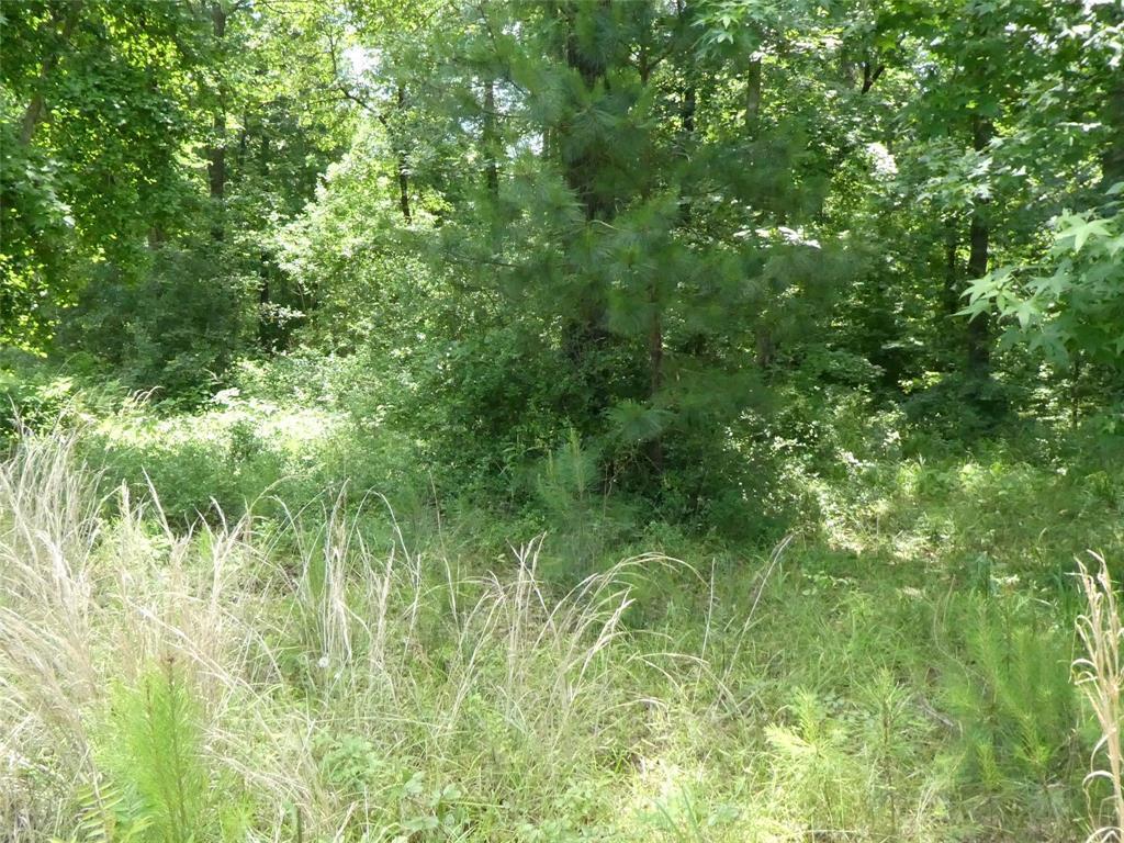 TBD Leaning Oak Drive, Point Blank, TX 77364