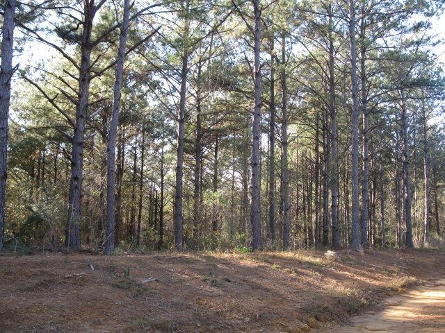 Lot 1 Parkview Estates, Ellisville, MS 39437 (MLS #76868) :: Exit Southern Realty