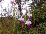 Orchid Land Dr - Photo 22