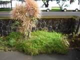 374 Kamehameha Ave - Photo 10