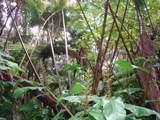 Ainahau Rd - Photo 1