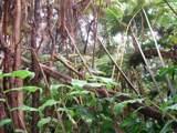 Ainahau Rd - Photo 3