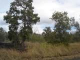 Tree Fern & Kona - Photo 2