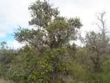 Tree Fern & Kona - Photo 5