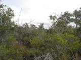 Tree Fern & Kona - Photo 6