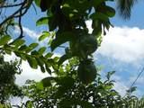 12-7003 Akanikolea St - Photo 16