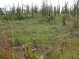 11-2275 Kaleponi Dr - Photo 1