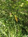 95-2844 Pohaku Rd - Photo 23