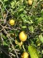 95-2844 Pohaku Rd - Photo 25