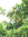 95-2844 Pohaku Rd - Photo 26