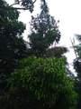 15-2737 Lai St - Photo 26