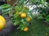 2371 Kilauea Ave - Photo 13