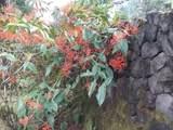 16-1325 Uhini Ana Rd (Road 1) - Photo 16