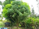 16-1325 Uhini Ana Rd (Road 1) - Photo 17