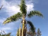 16-1247 Uhini Ana Rd (Road 1) - Photo 23