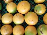 14-252 Papaya Farms Rd - Photo 13