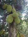 14-252 Papaya Farms Rd - Photo 15