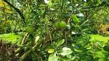 14-252 Papaya Farms Rd - Photo 16