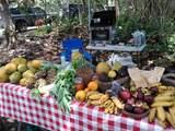 14-252 Papaya Farms Rd - Photo 2