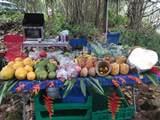 14-252 Papaya Farms Rd - Photo 4