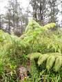 Plumeria Dr - Photo 2