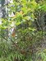 Plumeria Dr - Photo 3