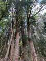 46-3645 Old Mamalahoa Hwy - Photo 29