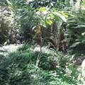 94-6704 Mamalahoa Hwy - Photo 19