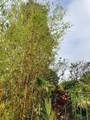 16-2118 Sugarcane Ln - Photo 1