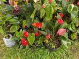 14-3473 Mauna Kea Rd - Photo 2