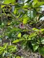 92-8764 Lehua Ln - Photo 13