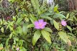 11-1319 Gardenia St - Photo 1