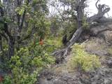 Plumeria Ln - Photo 7