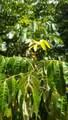 16-1378 Keaau Pahoa Rd - Photo 5