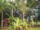 4901 Hanalei Plantation Rd - Photo 13