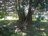 4901 Hanalei Plantation Rd - Photo 28