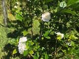 15-1638 Akeakamai Lp - Photo 29