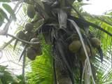 12-7043 Kaiau St - Photo 12