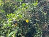 54-3761 Akoni Pule Hwy - Photo 6