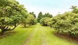 17-4197 Ualani Road - Photo 1