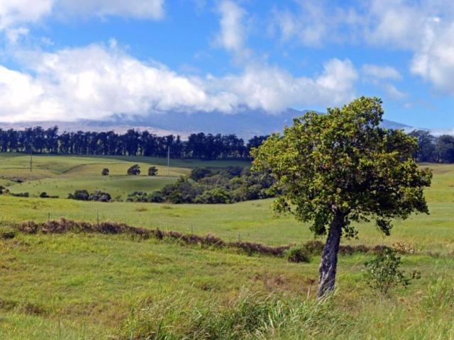 47-4350 Hawaii Belt Road, Honokaa, HI 96727 (MLS #609387) :: Aloha Kona Realty, Inc.