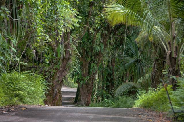 Government Beach Rd, Pahoa, HI 96778 (MLS #610578) :: Aloha Kona Realty, Inc.