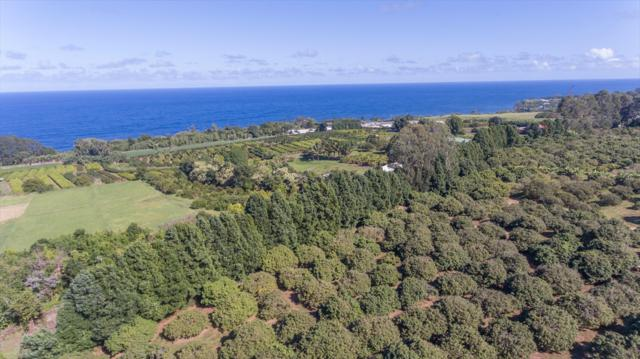 31-450 Old Mamalahoa Hwy, Ninole, HI 96773 (MLS #611477) :: Elite Pacific Properties