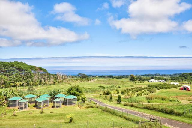 28-831 Akaka Falls Rd, Honomu, HI 96728 (MLS #612241) :: Elite Pacific Properties