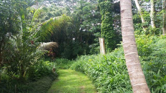 Old Government Road, Hakalau, HI 96710 (MLS #613167) :: Elite Pacific Properties