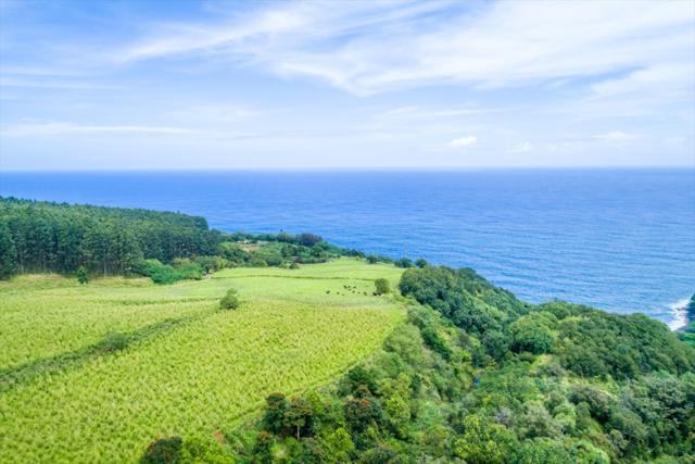 Pali Nana Rd, Papaaloa, HI 96780 (MLS #614632) :: Elite Pacific Properties