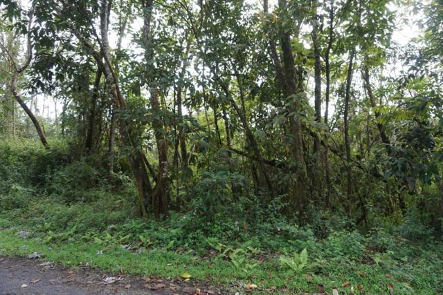 Niihau Rd, Pahoa, HI 96778 (MLS #615114) :: Aloha Kona Realty, Inc.