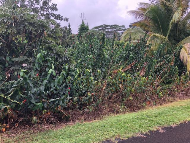 N Au St, Pahoa, HI 96778 (MLS #616909) :: Elite Pacific Properties