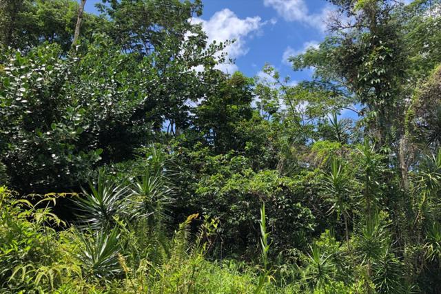 15-674 S Puni Mauka Lp, Pahoa, HI 96778 (MLS #618060) :: Aloha Kona Realty, Inc.