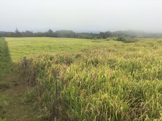 Address Not Published, Honokaa, HI 96727 (MLS #620456) :: Aloha Kona Realty, Inc.